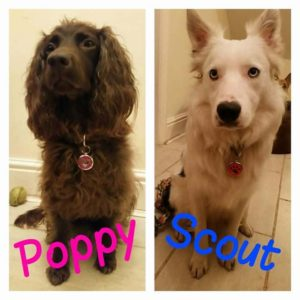 Poppy and Scout